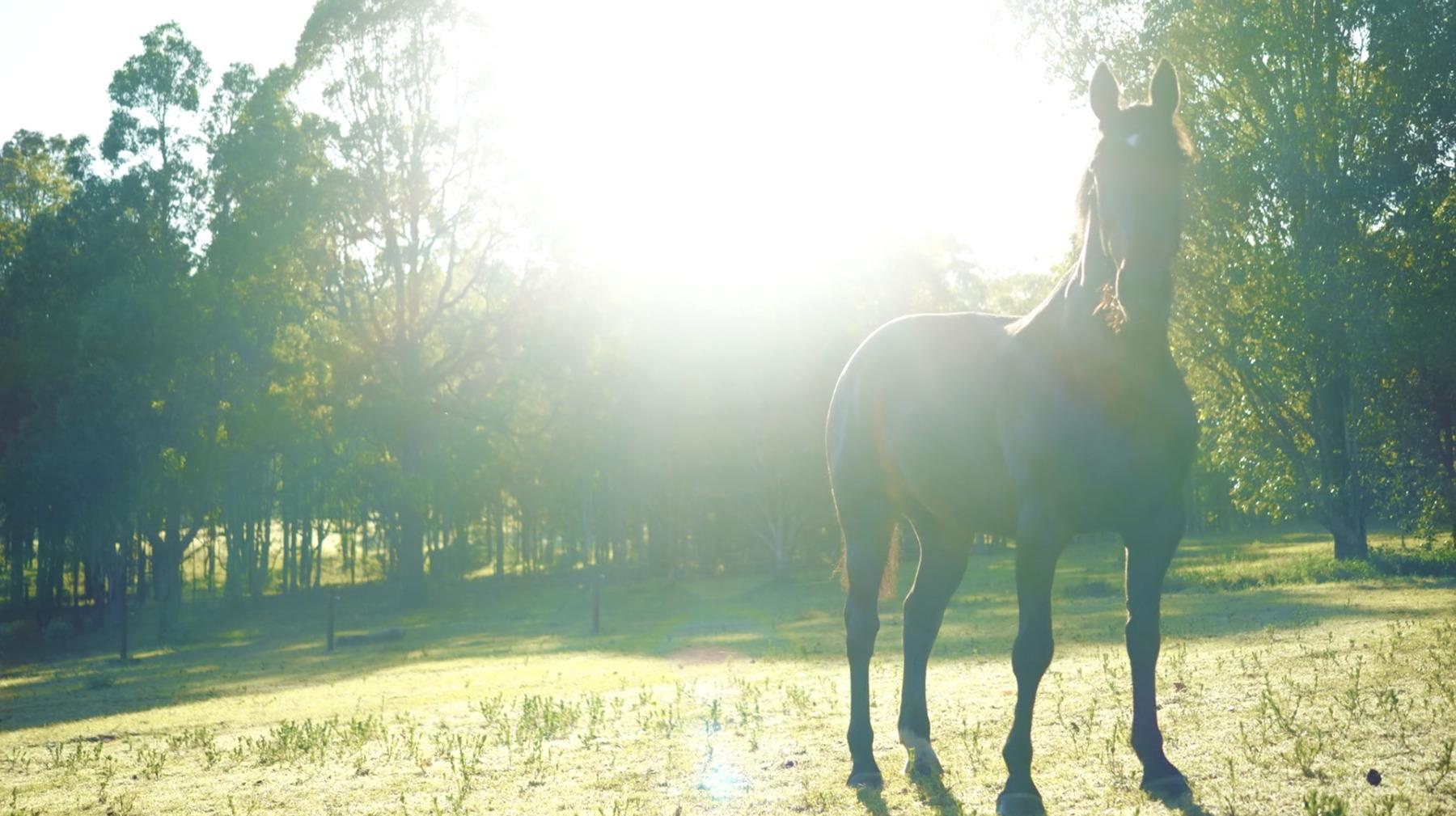 Horse-field-sun
