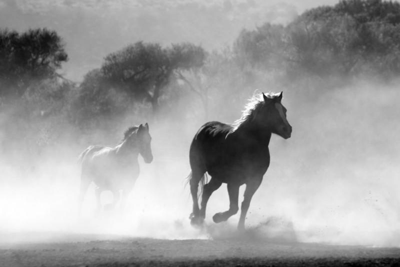 bnwhorse-3-2